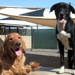 DOG AND CAT BOARDING, DAYCARE, GROOMING, ETC. FOR SALE IN COLUMBIA GORGE AREA